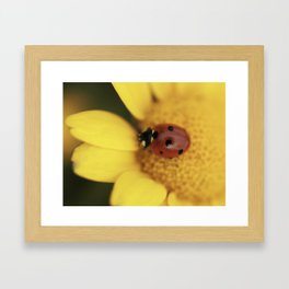 Ladybug on yellow flower - macro still life - fine art photo for interior design Framed Art Print