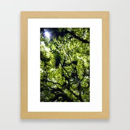 Sunlight Filtering through Ferns and Palm Trees in the Lush Rainforest of Mombacho Volcano, Nicaragu Framed Art Print