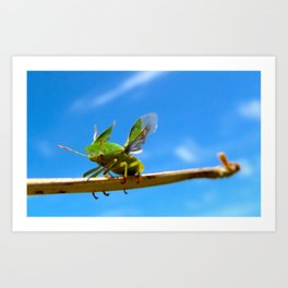 Shield Bug Art Print