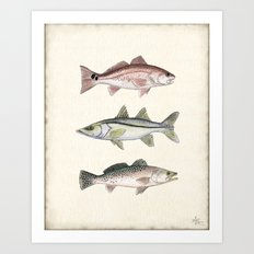 Inshore Slam! ~ Redfish, Snook, and Trout Watercolor Illustration by Amber Marine Art Print