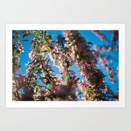 Trees full of pink flowers Art Print