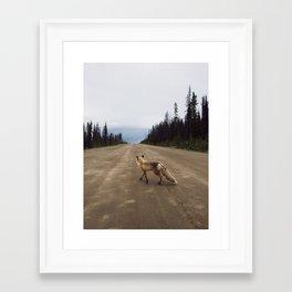 Road Fox Framed Art Print