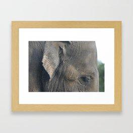 Elephant #1 Framed Art Print