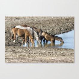 Thirst Canvas Print