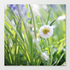 sunny summer meadow Canvas Print