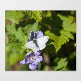 White Moth Photography Print Canvas Print