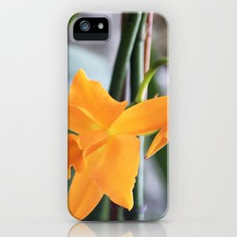 Longwood Gardens Orchid Extravaganza 71 iPhone Case