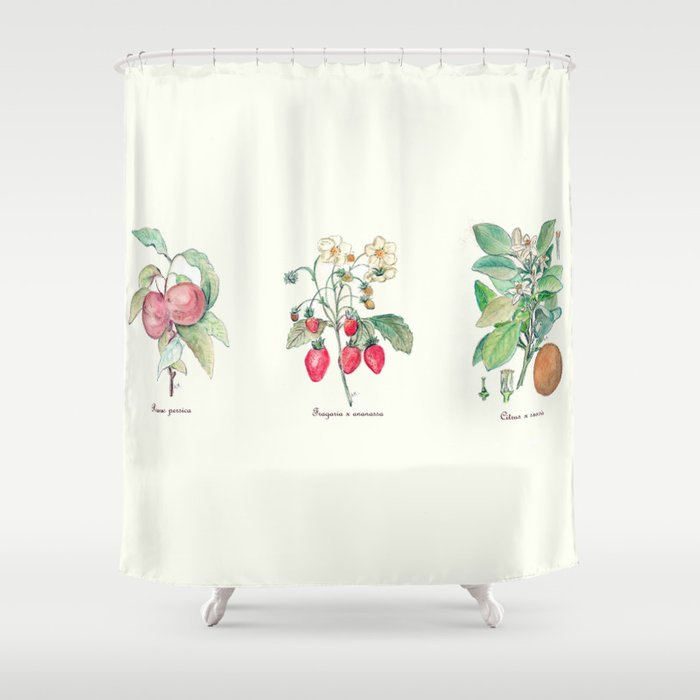 Vintage Botanical Fruit Shower Curtain