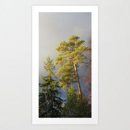 Storm Warning #02 Pine Art Print