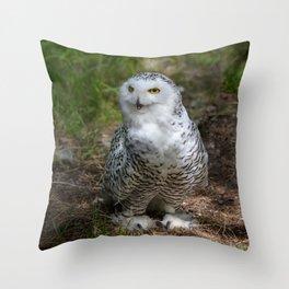 Alaskan Snowy Owl - Summer Throw Pillow
