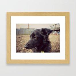 Koko the Border Collie Framed Art Print