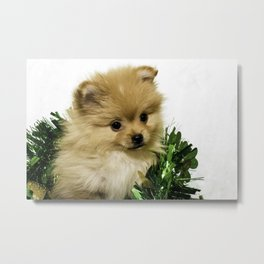 Tan Pomeranian Puppy Wrapped up in a Green and Gold St. Patrick's Day Garland Metal Print