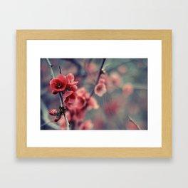 Flowering Quince Framed Art Print