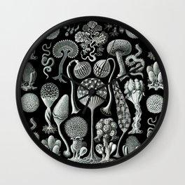 Ernst Haeckel - Mycetozoa (black) Wall Clock