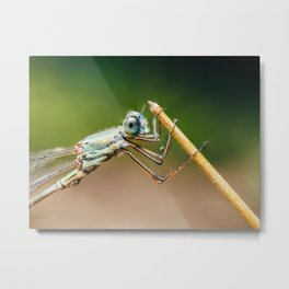 Dragonfly Macro Portrait In Nature, Nature Wall Art Print, Insect Close-Up Photography, Large Print Metal Print