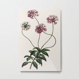 Primulaceae Metal Print
