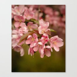 Vintage Blush Canvas Print
