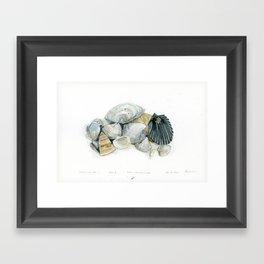 Seashell Composition 3 Framed Art Print