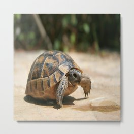 Portrait of a Young Wild Tortoise Metal Print
