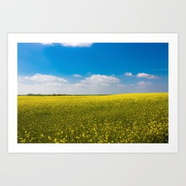 Drifting Days - Blissful Spring Day of Blue Skies and Yellow Canola Fields Art Print