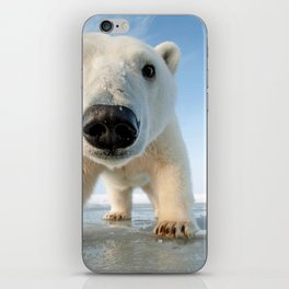 Super Cute Adolescent Polar Pear Checking Out Camera Close Up Ultra HD iPhone Skin