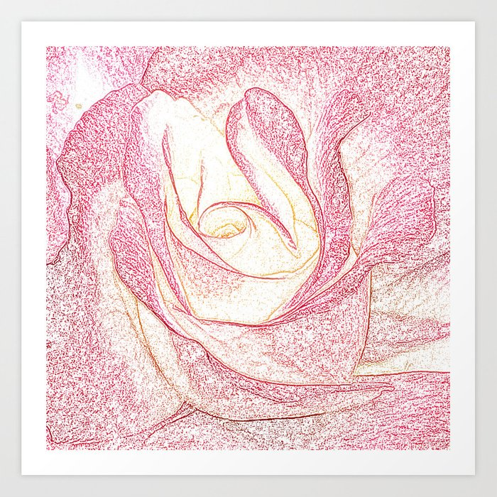 Summer Rose Pencil on White Art Print