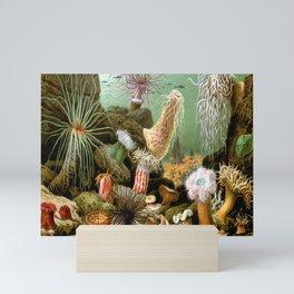 Sea Anemones Vintage Biology Mini Art Print