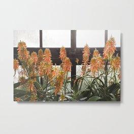 Torch Aloe Metal Print