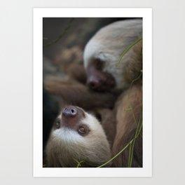Sloth Cuddles Art Print