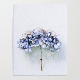 Delicate Hydrangea Poster
