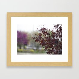 A dusting of snow Framed Art Print