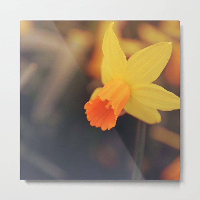 Yellow Narcissus Metal Print