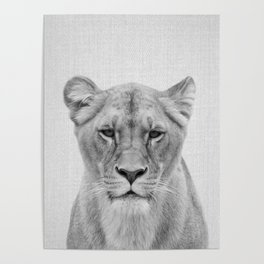 Lioness - Black & White Poster