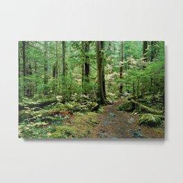 Forest Garden Metal Print