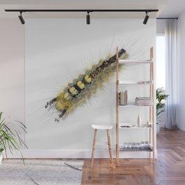 Rusty Tussock Moth Caterpillar Wall Mural
