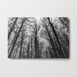 Naked trees forest, black and white Metal Print