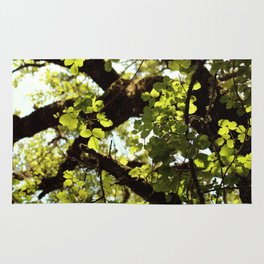 Filtered Canopy Rug