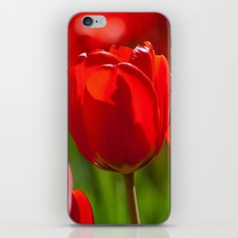 red tulips in sunlight iPhone Skin