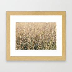 Field in the Sun Framed Art Print