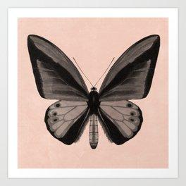 Butterfly Peach Art Print