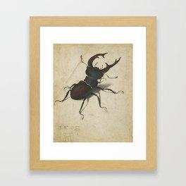 Stag Beetle - Albrecht Durer Framed Art Print