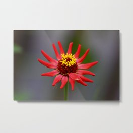 Wonderful Red Flower Metal Print