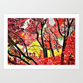 A Symphony of Red and Yellow Leaves Art Print