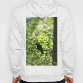 Black Bird Summer Green Tree Hoody