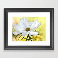 Floral White Cosmos Framed Art Print