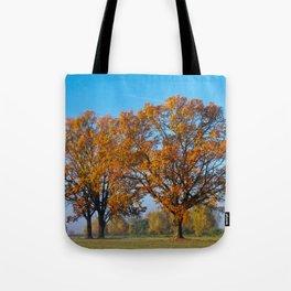 Oaks in the misty Autumn morning (Golden Polish Autumn) #2 Tote Bag