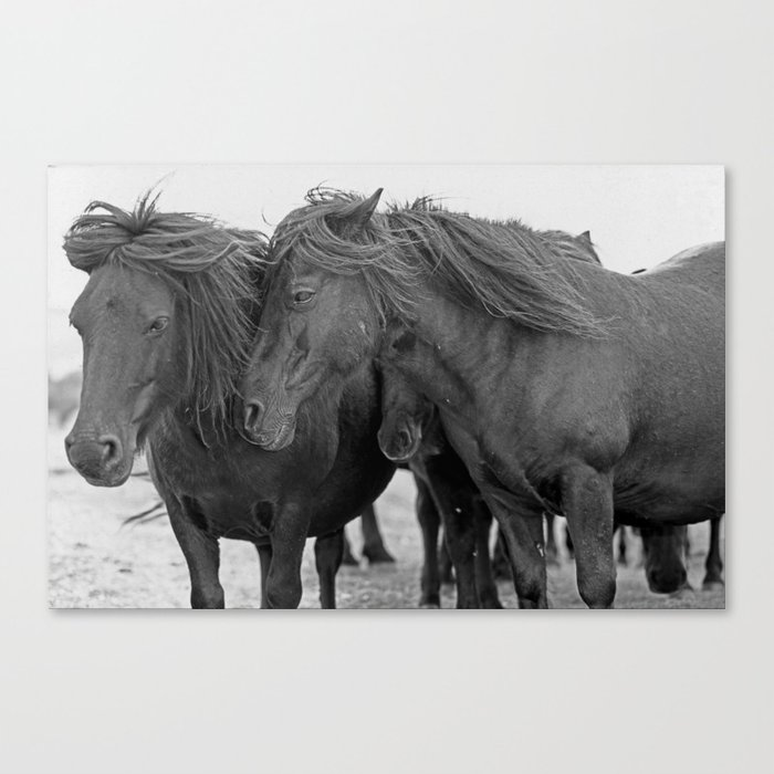 PONIES IN THE WIND Canvas Print