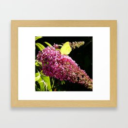 Buddleia with Butterfly Framed Art Print