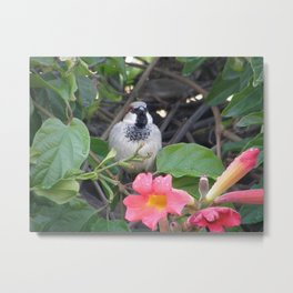 Sparrow in the Vine Metal Print