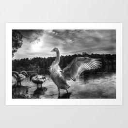 Swan lake in black and white Art Print
